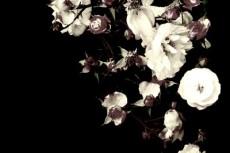 flower030