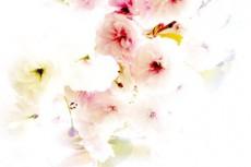flower082