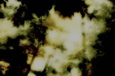 flower135