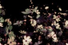 flower174