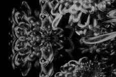 repeat-flower023_4