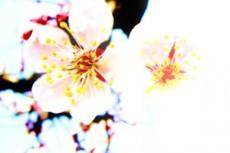 flower196
