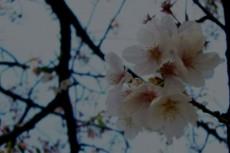 flower252