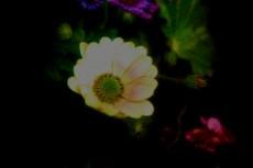 flower286