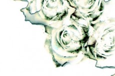 norepeat-flower051_3