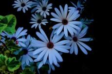 flower299