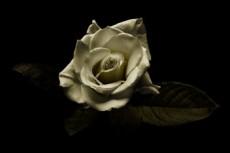 flower311