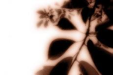 flower115_2