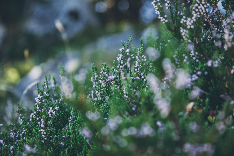 Zu Beginn führt der Weg über idyllische Wiesen bis zum Waldrand. Foto: Neoheimat