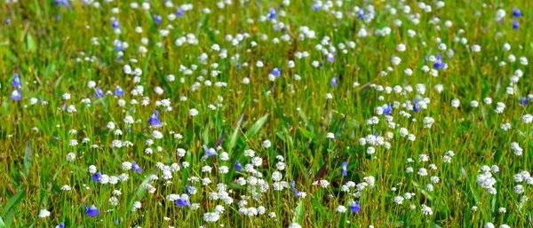 small-flowers-madayipara-ambili-aravind