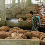 Újabb, emberre is veszélyes járvány jöhet Kínából
