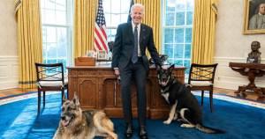 Biden kutyáit kiköltöztették a Fehér Házból