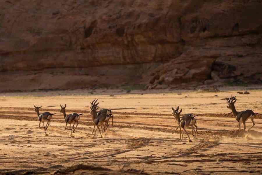 Sharaan Natural Reserve in Al-Ula 8