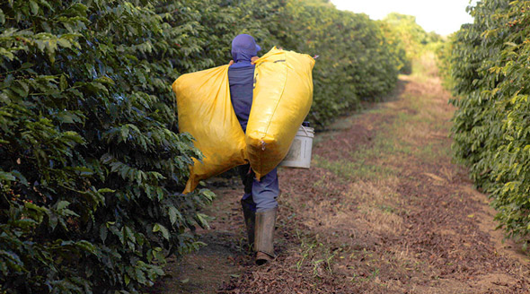 nestle and cargill are accused of perpetuating child slavery at ivory coast cocoa farms