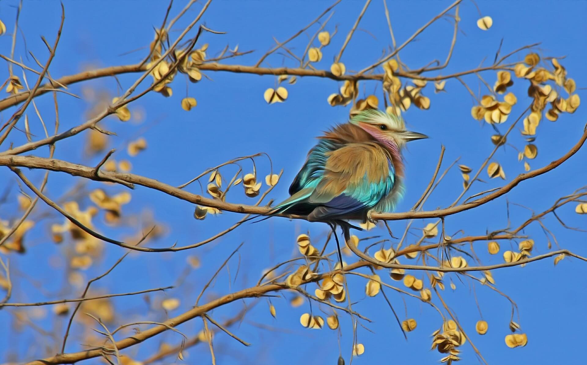 bird-515031_1920.jpg