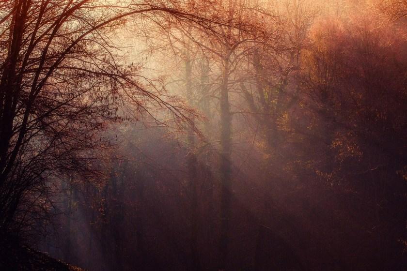 forest-1225983_1920.jpg