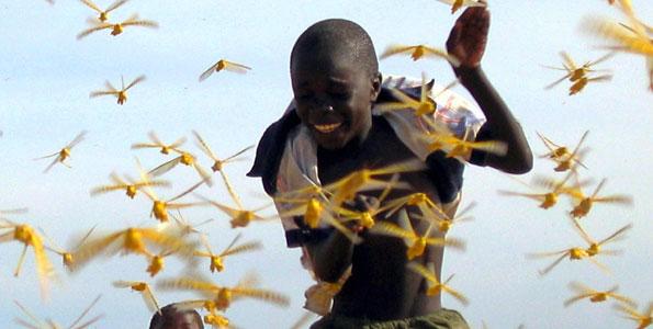 senegal neoteric niger