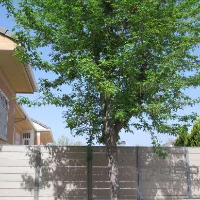 Valla madera composite exterior sin mantenimiento