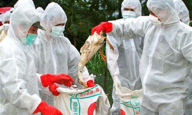 Bird flu confirmed in Taltalaiya zoo