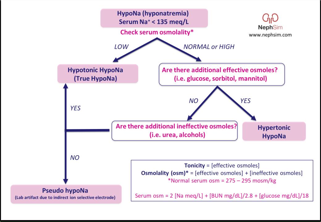 HypoNa NephSim