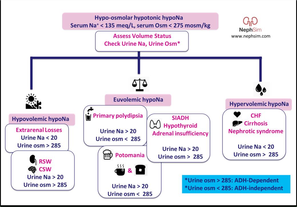 HypoNa NephSim2