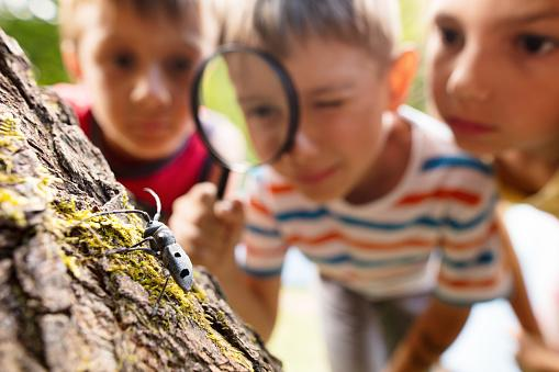 The photo shows kids watching the bug.