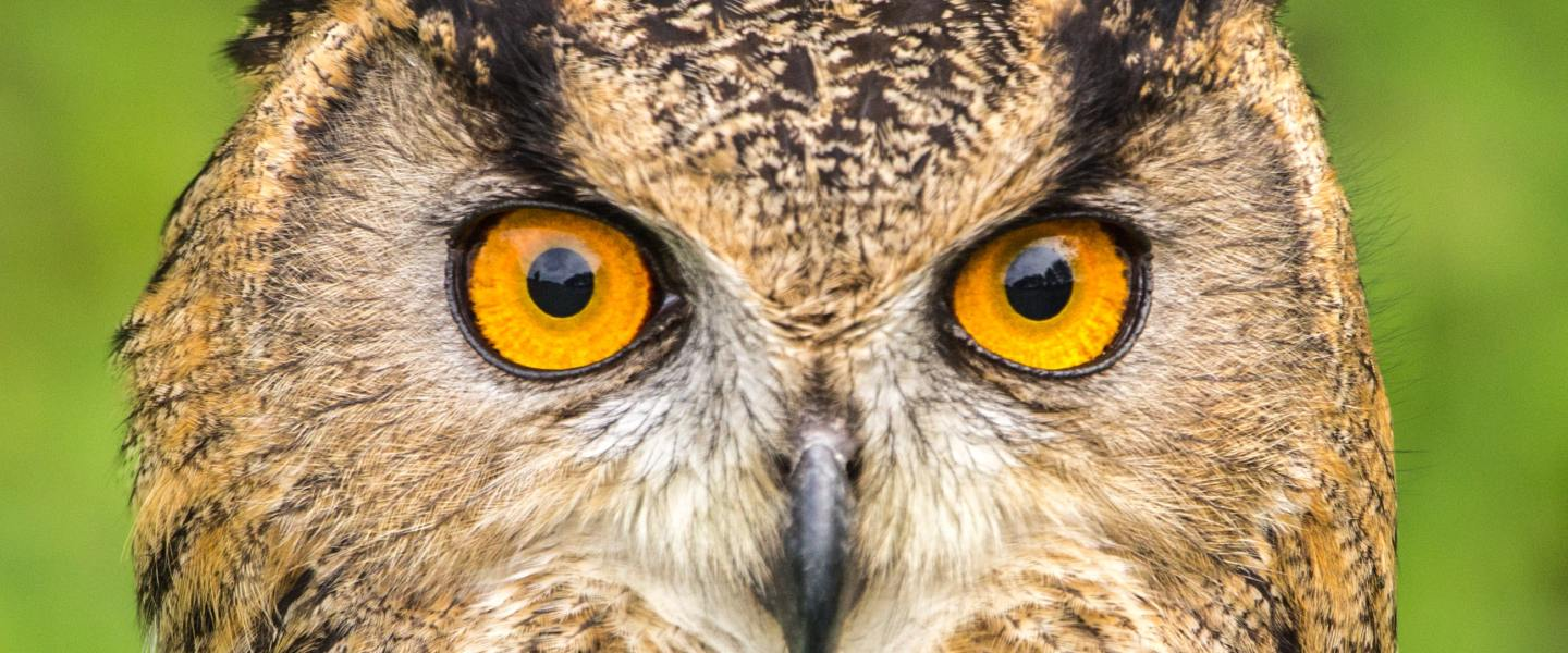 An omniscient owl, a sublunary being with the characteristics of outer space