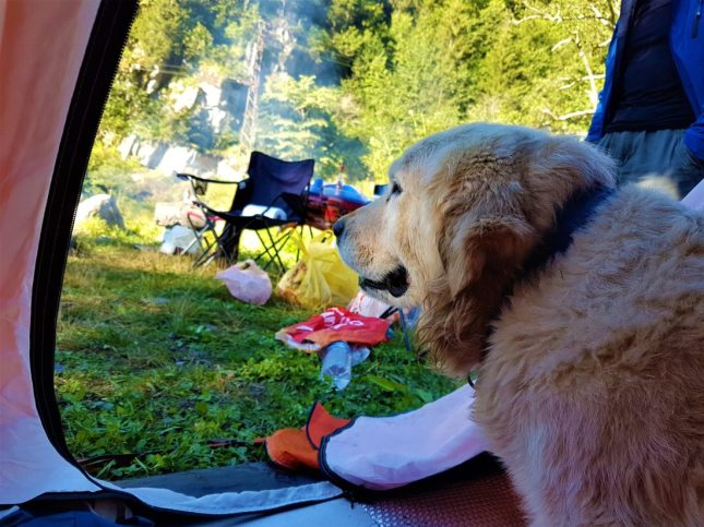 Çadırımıza dalan Sunny, ömrün uzun olsun