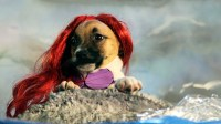 Give Thanks for Puppies in Disney Costumes | Nerdist