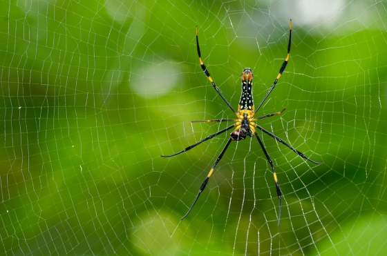 Scientists have discovered that spiders in space can adapt their web-building abilities using light instead of gravity as a guide.
