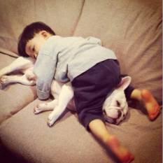 dog_friendship3