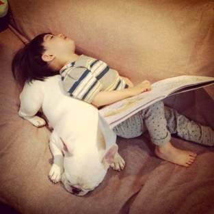 dog_friendship8