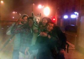 Franceses bêbados roubam lhama de circo e a levam para a noitada