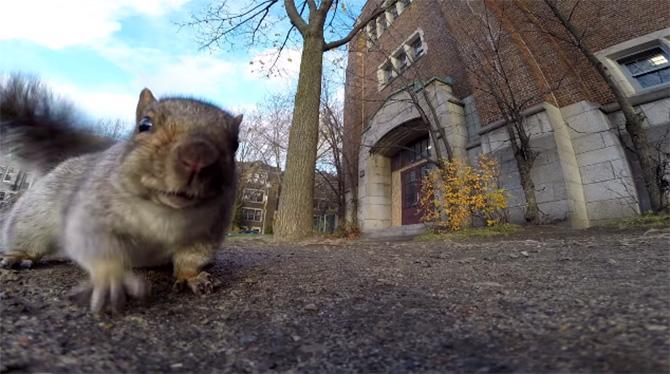 Esquilo pega GoPro e sobe em uma árvore