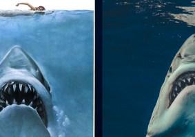 Fotógrafo recria pôster do filme Tubarão com imagem real
