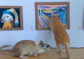 O museu para esquilos criado por um casal em quarentena