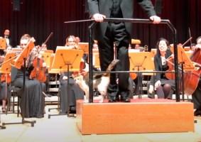 Gato interrompe uma orquestra em Istambul