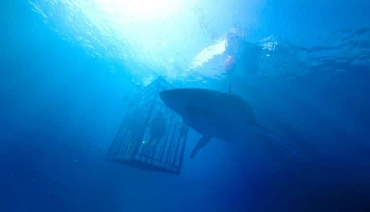 47 Meters Down: Uncaged / 47 Meters Down: The Next Chapter