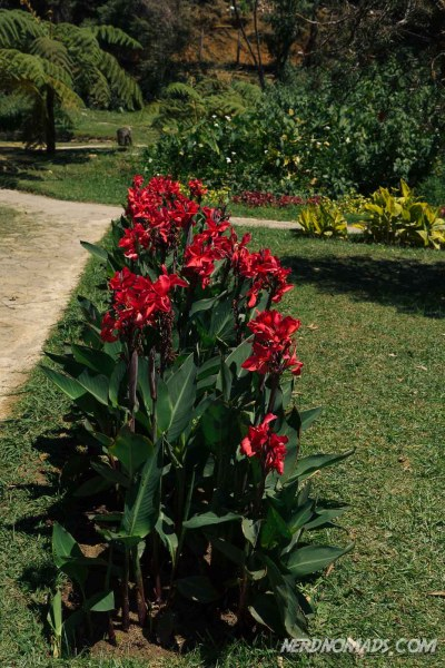 Red_Flowers_Victoria_Park_Nuwara_Eliya