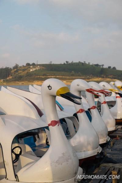 Swan_Boats_Gregory_Lake_Nuwara_Eliya
