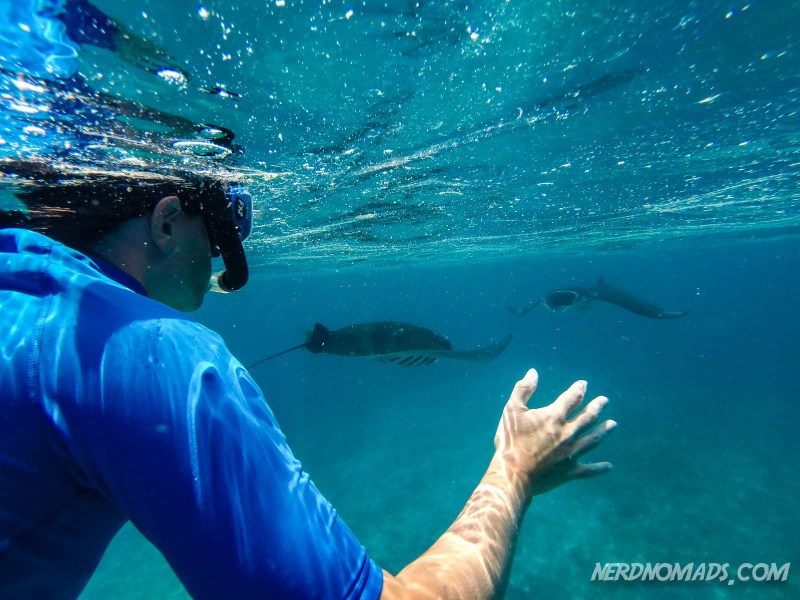 Snorkling with manta rays in Komodo National Park, Indonesia