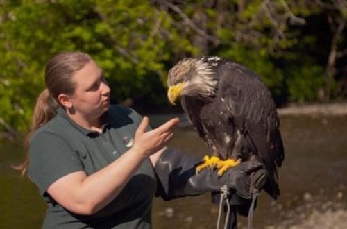 Alasca: Reabilitação Selvagem