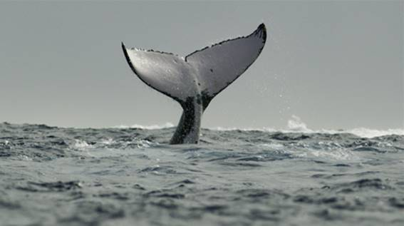 Baleias - Nerd Recomenda
