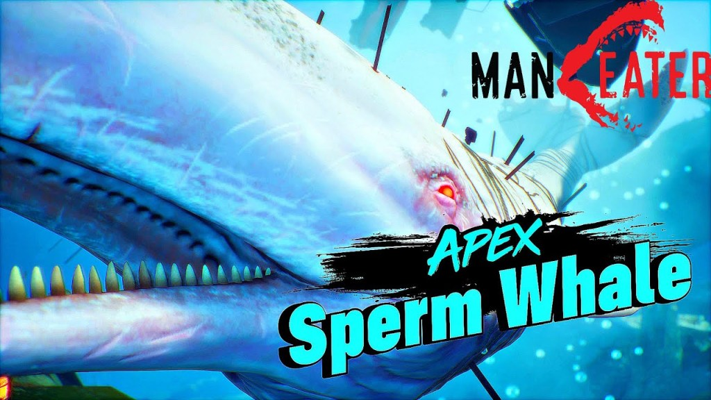 apex sperm whale maneater