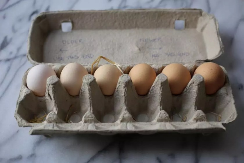 An egg carton containing eggs of many brown hues