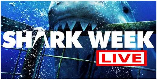 Shark Week, Night 4 review