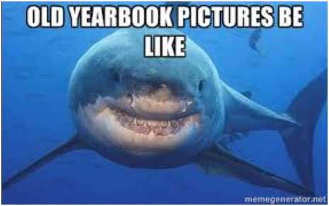 shark-meme