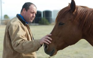 Brandon Ames cares for two horses on his ranch in Chandler. Their amniotic fluids will be used at Anicell Biotech. (Photo by Erica Apodaca/Cronkite News)
