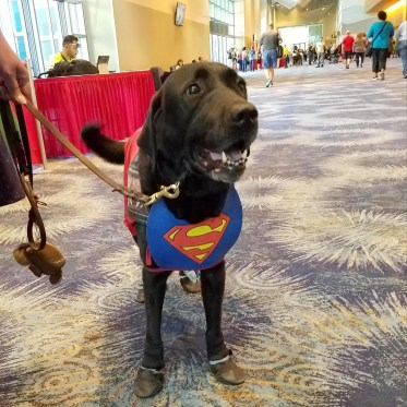 A Krypto by any other color is still a super dog at Phoenix Comic Fest, Friday, May 25, 2018, at the Phoenix Convention Center.
