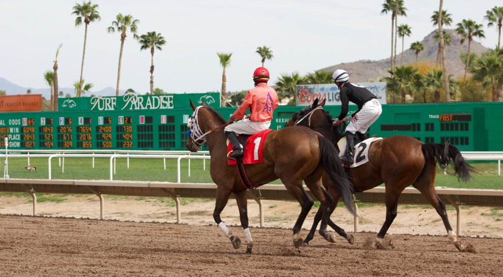 The number of horse deaths at Turf Paradise and other racetracks around the country have been alarming to the horse racing community. A fracture during a race often means a horse will be euthanized on site. (Photo by Jake Goodrick/Cronkite News)